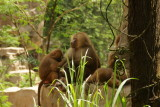singapore zoo (2).JPG