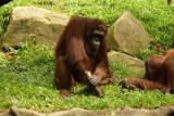 singapore zoo (21).JPG