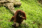 singapore zoo (22).JPG