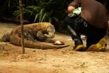 singapore zoo (28).JPG