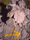 Trailmarks