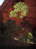 'Enlightened' tree