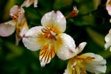 Rainy Flowers