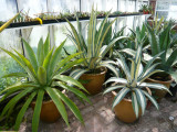 The Agave Nursery near Matlock