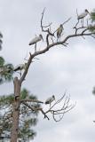 Work Stork Tree