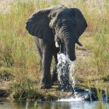 Kruger National Park and Marloth Park - August 2007