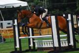 Horses (Nikon 70-300mm VR)