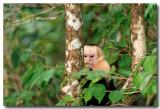 White face monkey 1