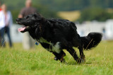 Julie's dogs :)