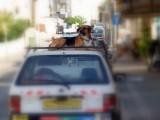 dog on car roof.JPG