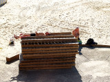 sunbathing.JPG