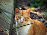 yellowcat.JPG