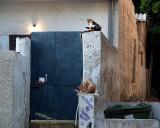 2cats bluedoor.JPG