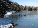 Hawrelak Park - first ice 1.jpg