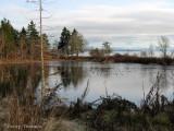 Pond near Qualicum Beach 2.jpg