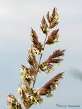 Grass A2a.jpg