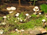 Fungus Q1.JPG