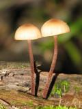Mushroom Ma.jpg