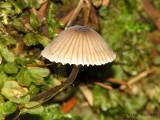 Mushroom U1a.jpg