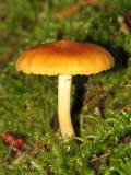 Mushroom W1a.jpg