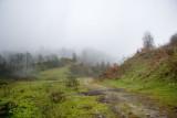 Siyah kal Forest