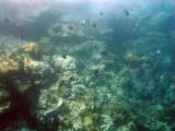 Cousteau Marine Reserve, Ilets Pigeon, Guadeloupe