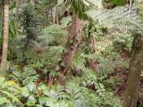 Parc des Mamelles, Guadeloupe