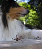 mantis religioso and sabrina - 1
