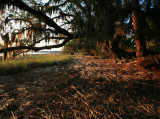 Marsh-Oaks-1WS.jpg