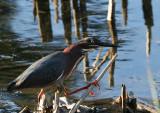 Heron-with-Fishing-Pole