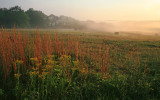 Field-in-Fog-WS.jpg