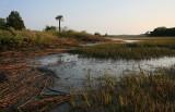 Ebb Tide on the Salt Marsh