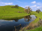 Cow-Pond-PWS.jpg