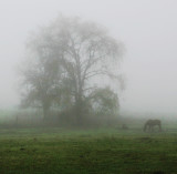One Horse in Fog.jpg