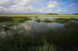 Marsh Under Broken Clouds.