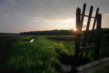 Old Plantation Rice Field.
