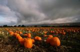Foreboding-Harvest.jpg