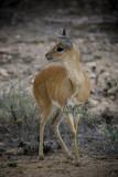 Kruger44