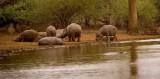 Kruger NP, Hippo