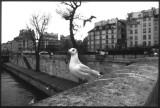 PARIS-018b