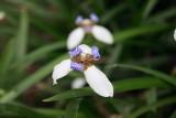 Da Tam Flower 2