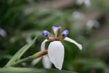 Da Tam Flower 3