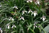 Da Tam Flower 4