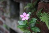Da Tam Flower 5