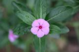 Da Tam Flower 8