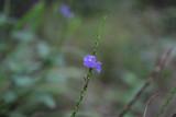 Da Tam Flower 9