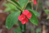 Da Tam Flower 10