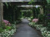 A walk in Wonderland