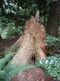 Termite Heavan
