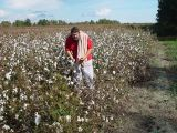 DON TRIED HIS HAND AT PICKING COTTON..................NOT REAL GOOD AT IT